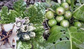اعشاب طبيه ضروريه لصحتك 1497583_235158929992244_2007084023_n