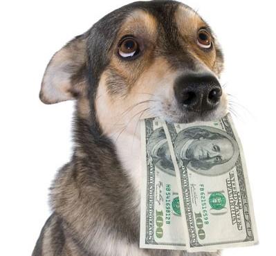 200_dollar_dog_1