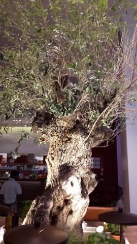 المطعم حول الشجرة