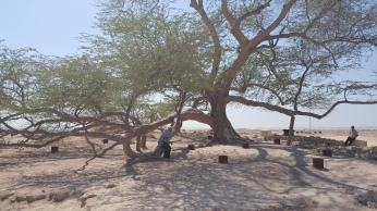 هكذا تبدو شجرة الحياة