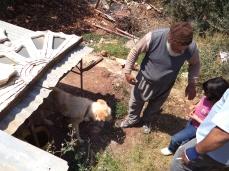 أبو عقل يحاول أن يزيل خوف الصغار من الكلاب