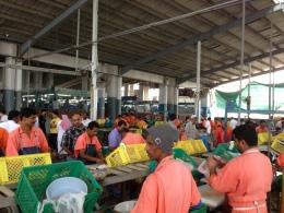 تنظيف السمك في السوق