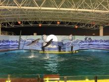 عروض الدلافين في جدة