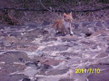 عندما رأتنا هذه القطة